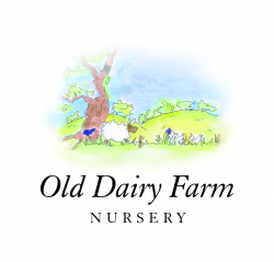 Old Dairy Farm Nursery